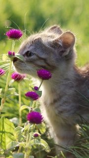 A kitty stops to smell the flowers.
