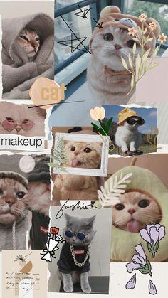 Cat aesthetic wallpaper
