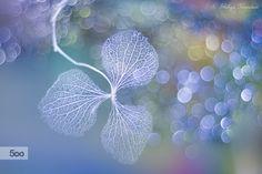 Ephemeral Beauty by Shihya Kowatari on 500px