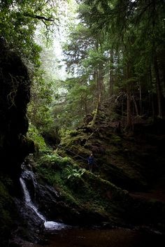 Puck's Glen near Loch Lomond. I wish that could be me.