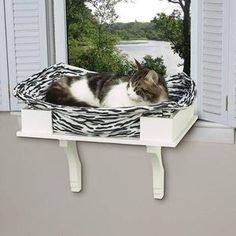 How to Build a Cat Window