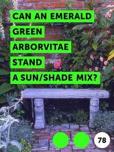 Can an Emerald Green Arborvitae Stand a Sun/Shade Mix?. The Eastern arborvitae cultivar Smaragd is more often sold under the names Emerald or Emerald Green. Its flattened sprays of scaly, evergreen needles densely cover the upright, columnar silhouette, making it an exceptional shrub for creating garden hedges or screens. It also makes an...