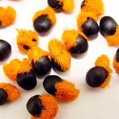 Semillas de Flor del Pájaro o Strelitzia Reginae - Tienda Virtual de Semillas Exóticas en Chile   Semillas del Mundo   Semillas exóticas Chile.