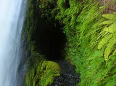 Eagle Creek, Oregon hike. Dad has been asking me to do this with him!