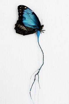 anne-ten-donkelaar-broken-butterflies9.jpg (818×1227)