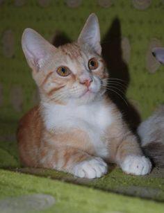 KIROSHI - Gato adoptado - AsoKa el Grande