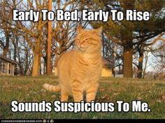 Night cat! #INFP #insomnia