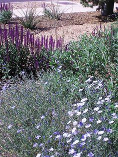 Salvia nemerosa, Linum, Hesperaloe, Penstemon