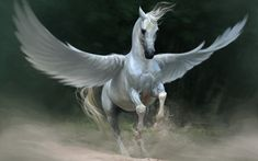 Pegasus horse Wallpapers Pictures Photos Images                              …