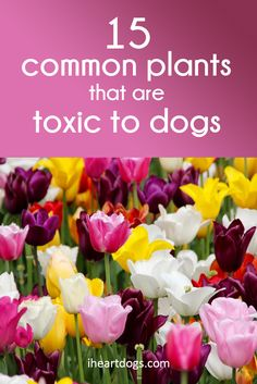 Keep these plants far from your pet!