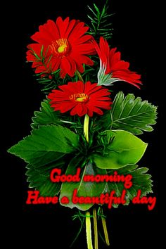 Good Morning, Have A Beautiful Day Good Morning Beautiful Pictures, Good Morning Inspiration, Good Morning Picture, Good Morning Flowers, Good Night Image, Morning Pictures, Good Morning Images, Good Morning Saturday, Good Morning Cards