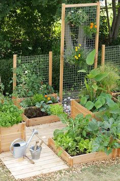 Raised boxes with trellis