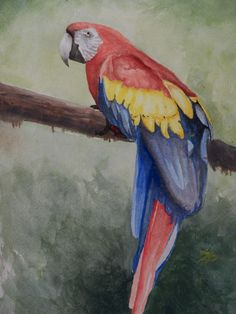 Wildlife Paintings of Costa Rica
