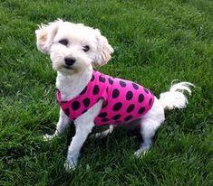 summer dog clothes dog tee shirt pink dog tank top dog