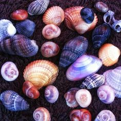 Seashells from the Black Sea