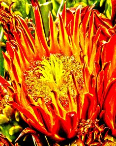 Interior #decor wall art for home, office and businesses with #orange colors Close-up photo of a cactus #flower  with bright yellow and orange colors by Judi Saunders.