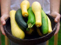 Tuottiko kasvimaa satoa? Kesäkurpitsa sopii niin grillattavaksi, hillopurkkiin kuin pastan sekaan.