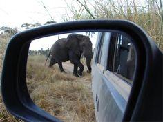 Tarangire National Park instead of the Ngorongoro Crater