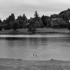 Le bain #auvergne #latourdauvergne #lake #nature #bath #baignade #nature #green #water #lac #mountain #france #campagne #leica #leicaq #leicacamera #leicaimages #bw #bnw #blackandwhite #noiretblanc #black #nb #bw_lover #explore #wander