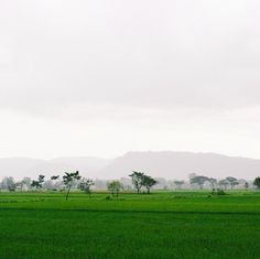 Sometimes all you need is just a little touch of nature.  Pict was taken when i was on my way from Candi Prambanan to Candi Ijo, Yogyakarta. It was raining lightly, but I was still able to capture this amazing view :)