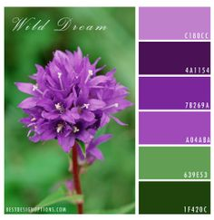 purple color palette | purple floral color palette