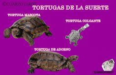 Tortugas de la suerte https://www.cuarzotarot.es/blog/posts/tortugas-de-la-suerte  #FelizMiércoles #Amuletos #Talismanes #deseos #suerte #VidaSana