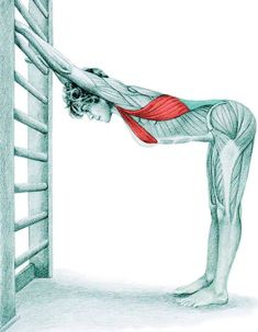 So what kind of muscles do you stretch when you do yoga? Look at these stretching exercises with pictures do find out - Vicky Tomin is a Yoga exercise Bikram Yoga, Kundalini Yoga, Yoga Meditation, Fitness Workouts, Yoga Fitness, Latissimus Dorsi, Stretching Exercises, Yoga For Beginners, Massage Therapy