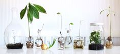 SOFIAMILK - Various Plants