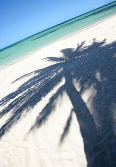 a shadow of a palm tree. there were so many pictures of palm trees, but I picked this shadow instead. Paradis Tropical, Beach Please, I Love The Beach, Tree Photography, Ocean Beach, Playa Beach, Sand Beach, Belle Photo, Beautiful Beaches