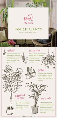 Guide to watering house plants