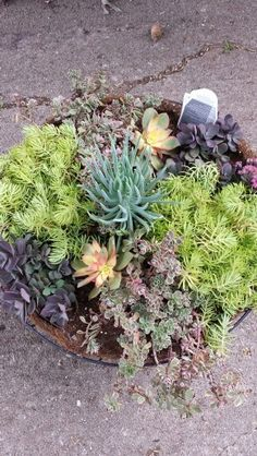 Hanging basket of succulents seen from above.