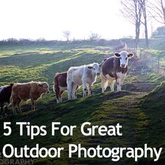 5 Tips For Great Outdoor Photography