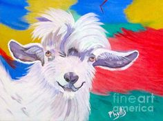 Angora Sweetie Painting by Phyllis Kaltenbach - Angora Sweetie Fine Art Prints and Posters for Sale
