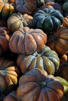 Beautiful pumpkins                                                                                                                                                      More