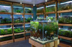 Aquarium Zen, 920 NE 64th St, Seattle, WA 98115