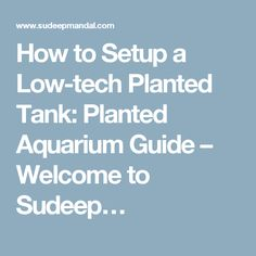 How to Setup a Low-tech Planted Tank: Planted Aquarium Guide – Welcome to Sudeep…