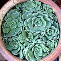 No idea why, but I'm obsessed with succulents. They are so geometric and beautiful. Like plant art.