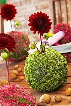 Floral Arrangement Vignette - Red dahlias in moss balls… Fiorista Italiano