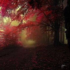 #woods
