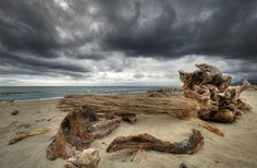 photos of driftwood | home video photo about