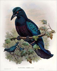 Birds of paradise 33
