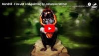 """Mandrill - Fine Art Bodypainting by Johannes Stötter  Mandrills are the world's largest monkeys. Charles Darwin wrote in The Descent of Man that """"no other member in the whole class of mammals is coloured in so extraordinary a manner as the adult male mandrill's"""". Fine art bodypainter Johannes Stötter is back with yet another amazing creation..."""