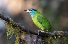 Wild Birds with a Splash of Colour