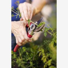 Early Spring: Prune Now to Enjoy Later #spring #gardening