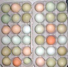 Araucana eggs. Carrboro Farmers' Market. Carrboro, NC