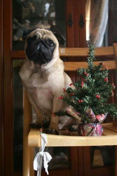 Christmas Pug:  Xmas tree 4 small critters