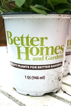 Better Homes and Gardens @ Walmart has plants and flowers! Check out the vast assortment at your local walmart.
