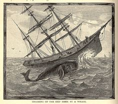 the essex, first ship to be destroyed by a sperm-whale (artist unknown)