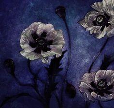 Soul Deep In Nature -·=»‡«=·❂·=»‡«=·-