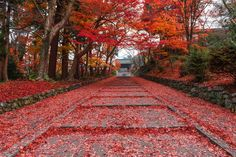 Red carpet - Garden Staircase, Kyoto, Japan.